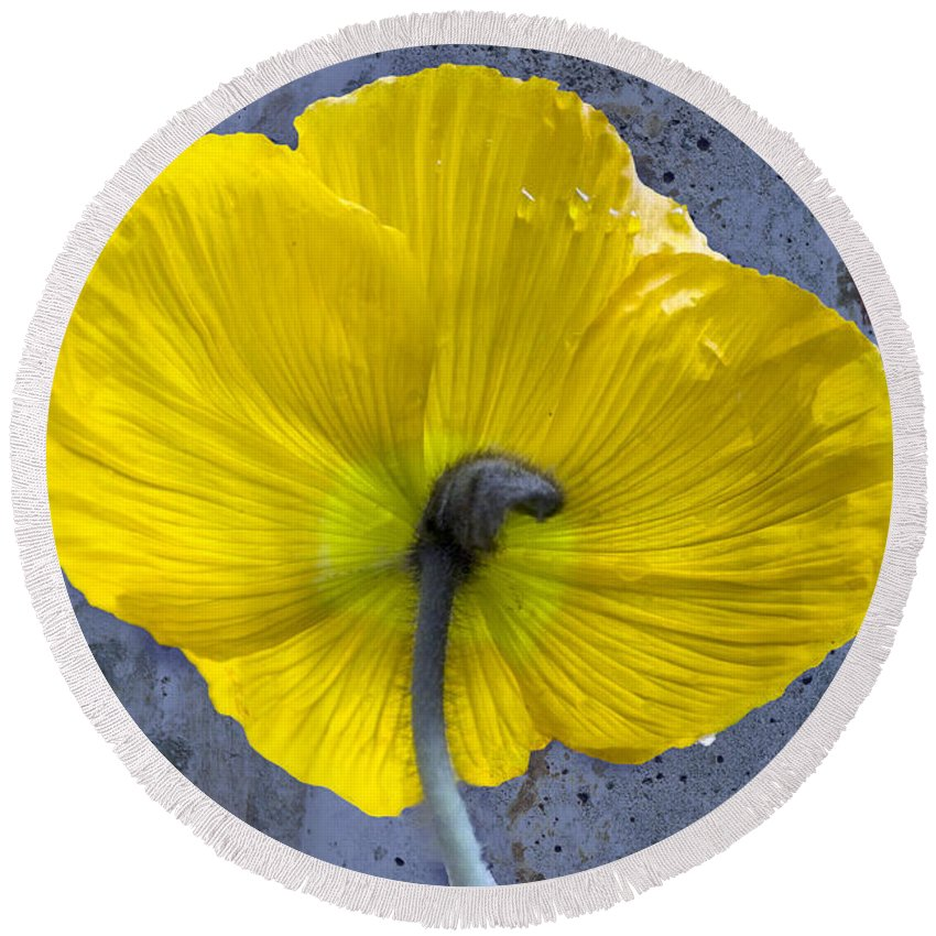 Poppy Round Beach Towel featuring the photograph Delicate And Strong by Heiko Koehrer-Wagner