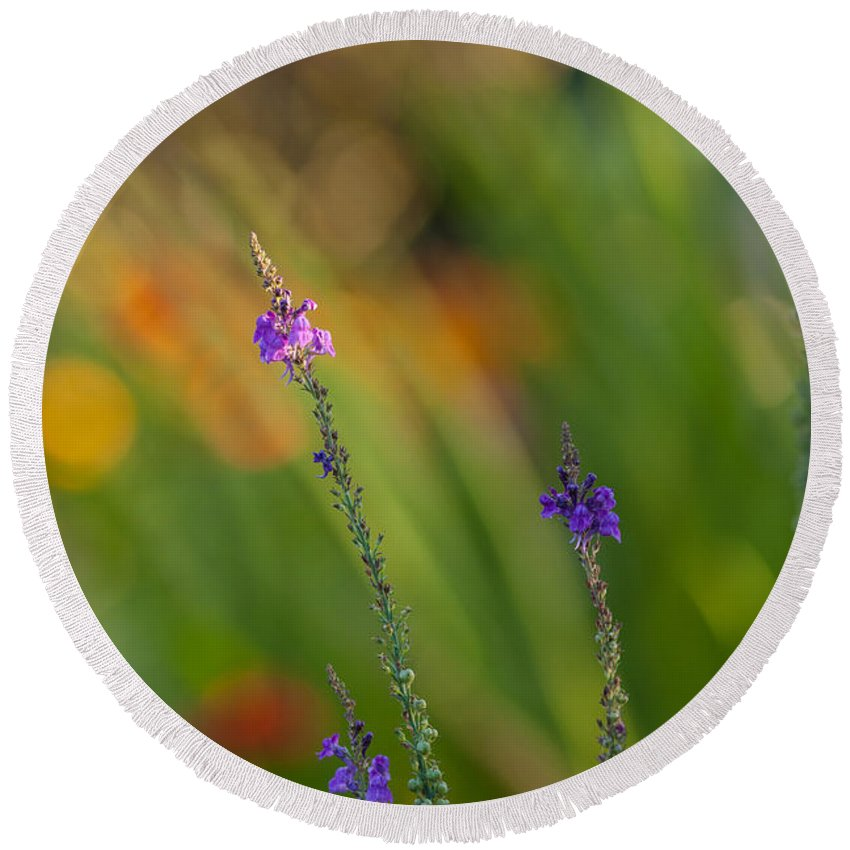 Flower Round Beach Towel featuring the photograph Delicate And Vivid by Mike Reid