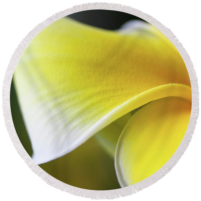 Yellow Round Beach Towel featuring the photograph Delicate Yellow by Pam Fong