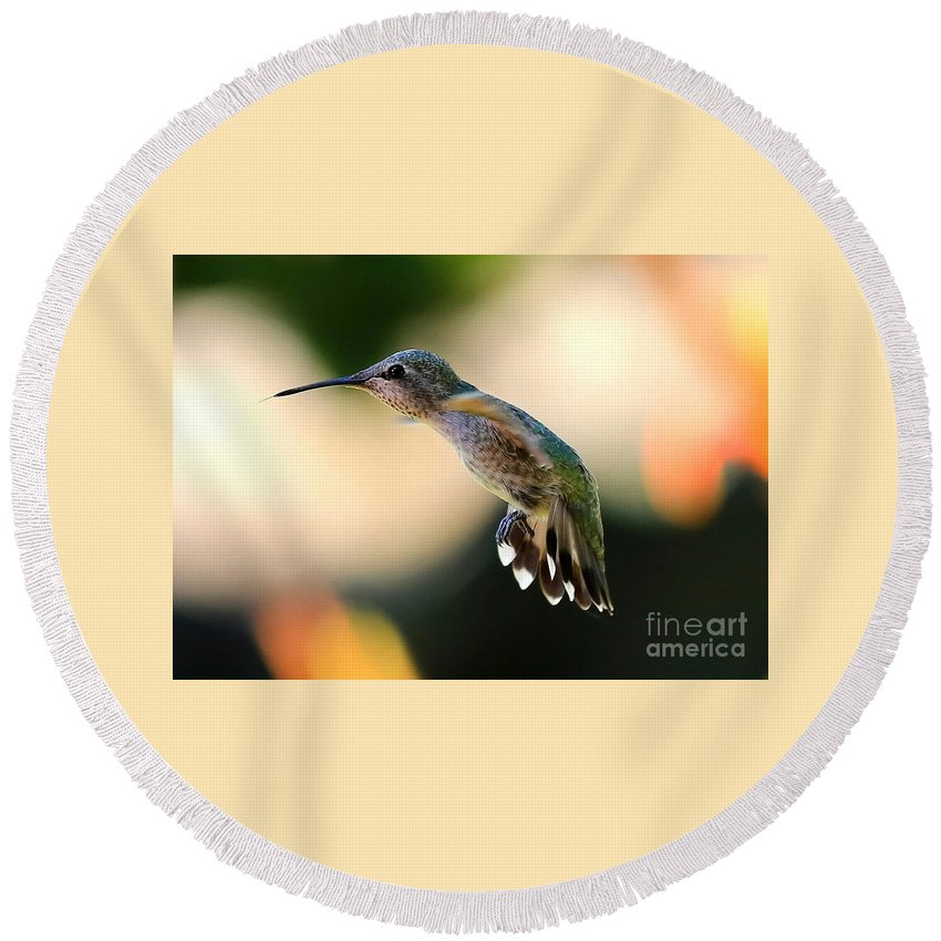 Hummingbird Round Beach Towel featuring the photograph Determined Hummingbird by Carol Groenen