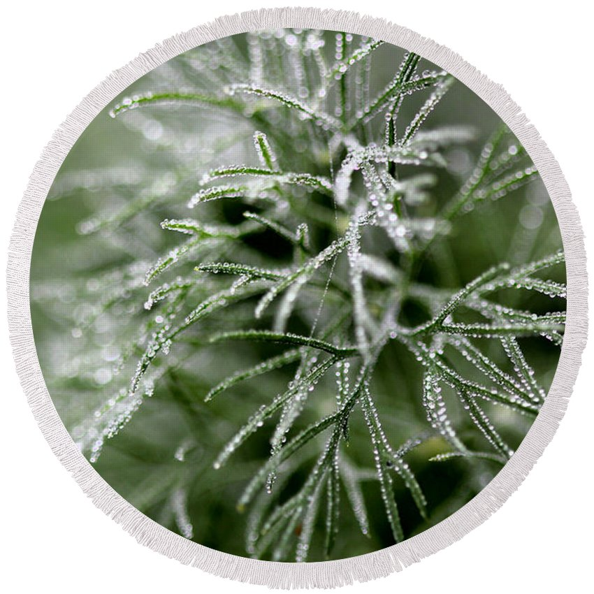 Dill Round Beach Towel featuring the photograph Dill After The Rain by Ericamaxine Price