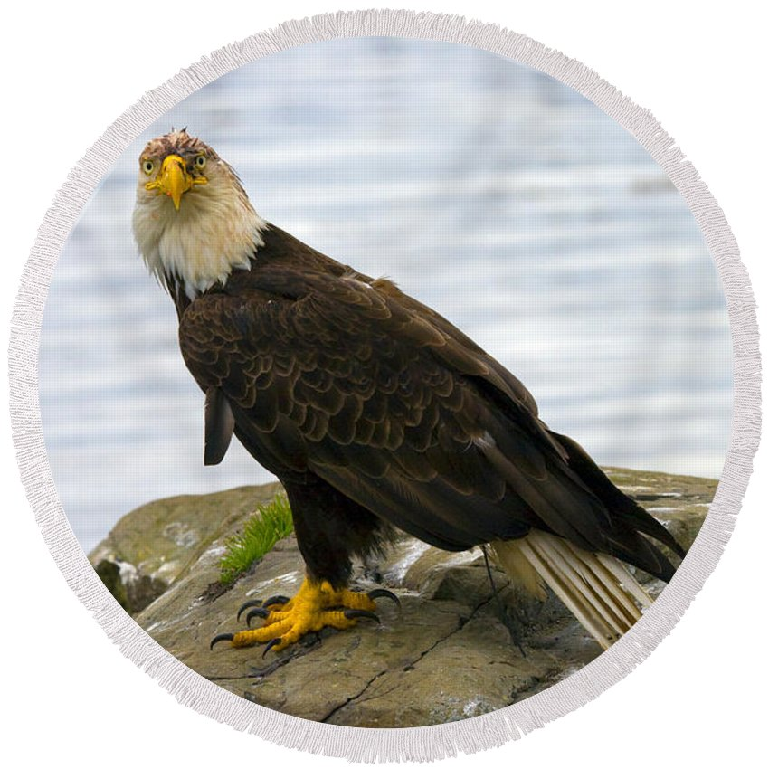 Eagle Round Beach Towel featuring the photograph Dirty Bird by Mike Dawson