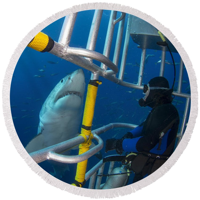 Carcharodon Carcharias Round Beach Towel featuring the photograph Diver Observes A Male Great White Shark by Todd Winner