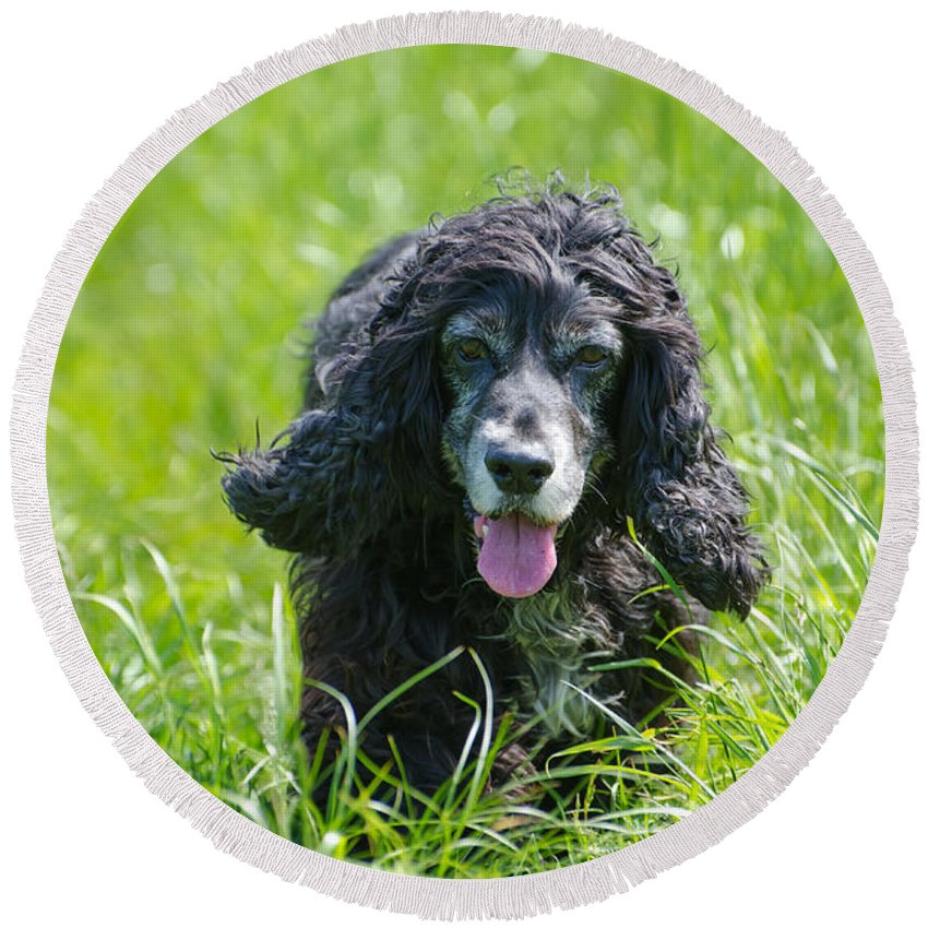 Dog Round Beach Towel featuring the photograph Dog On The Grass by Mats Silvan