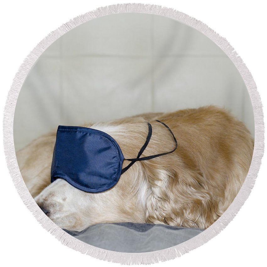 Dog Round Beach Towel featuring the photograph Dog Sleeping With A Sleep Mask by Mats Silvan