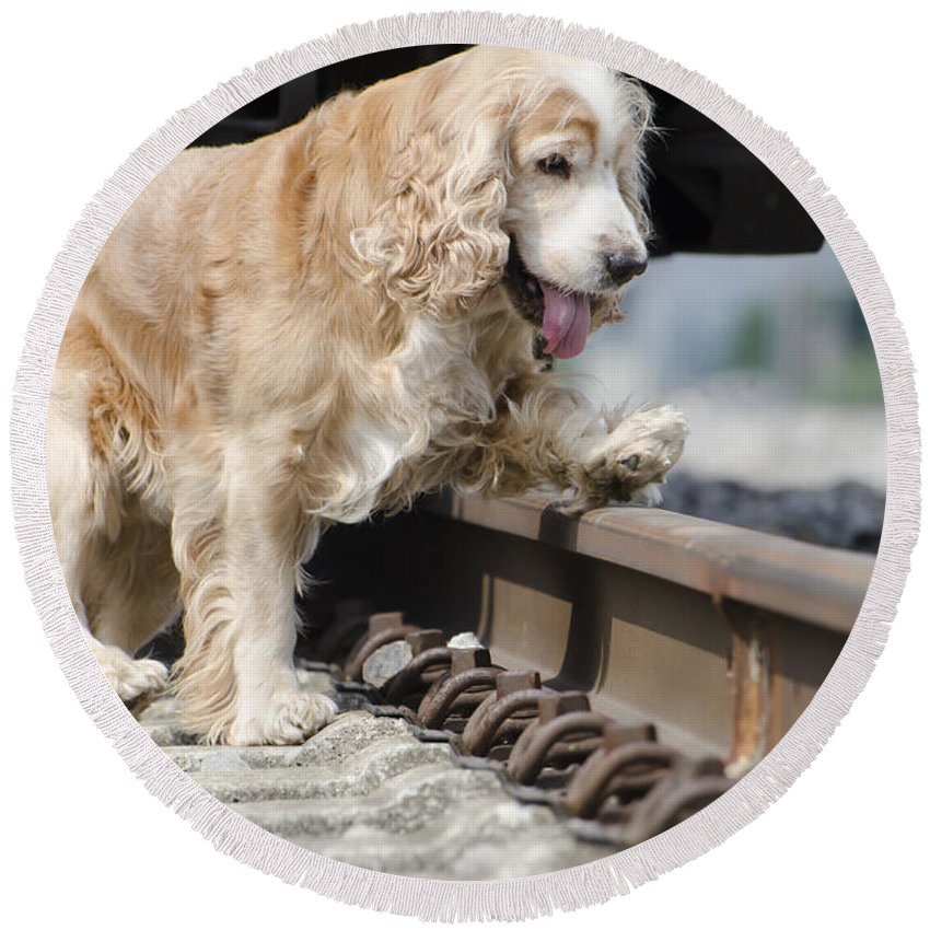 Dog Round Beach Towel featuring the photograph Dog Walking Over Railroad Tracks by Mats Silvan