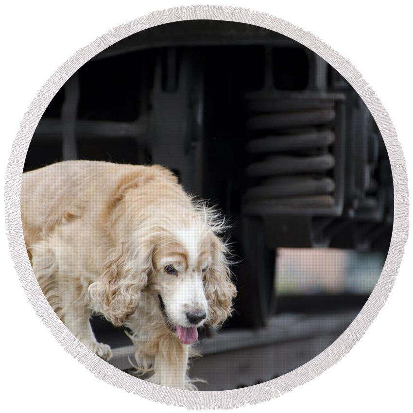 Dog Round Beach Towel featuring the photograph Dog Walking Under A Train Wagon by Mats Silvan