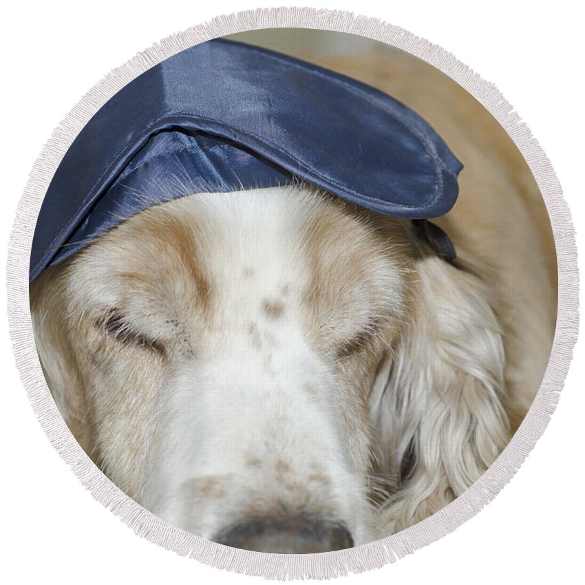 Dog Round Beach Towel featuring the photograph Dog With Sleep Mask by Mats Silvan