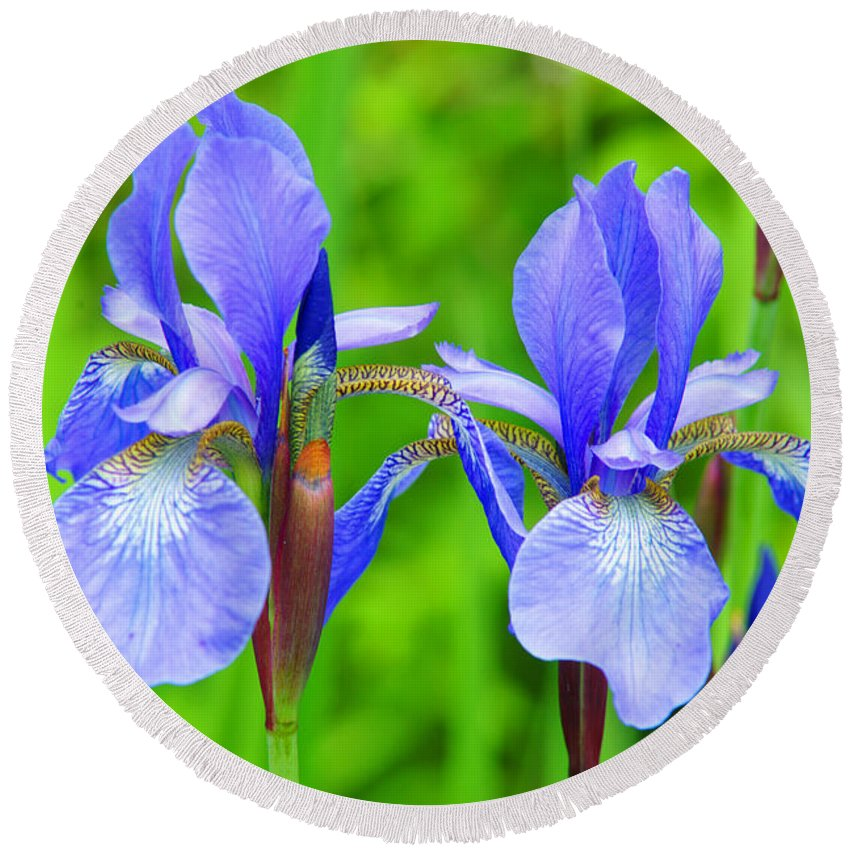 Flowers Round Beach Towel featuring the photograph Double Iris by Randy Harris