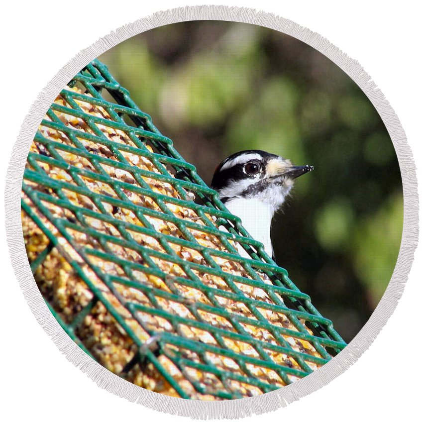 Woodpecker Round Beach Towel featuring the photograph Downy by Art Dingo