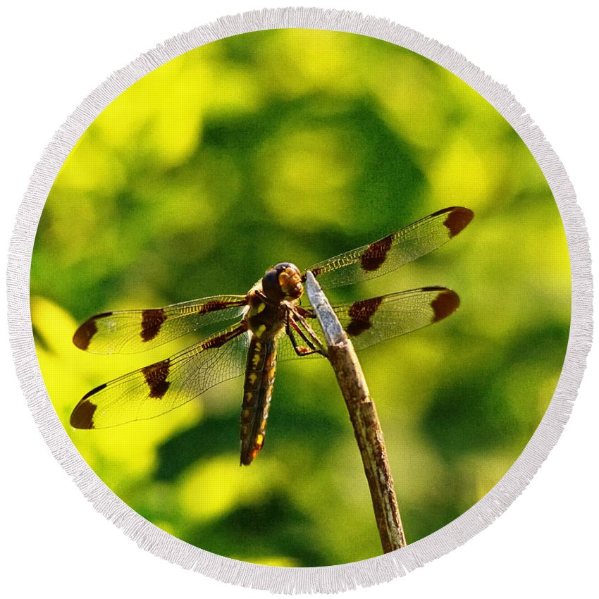 Dragonfly Round Beach Towel featuring the photograph Dragonfly In Green by Susan Capuano