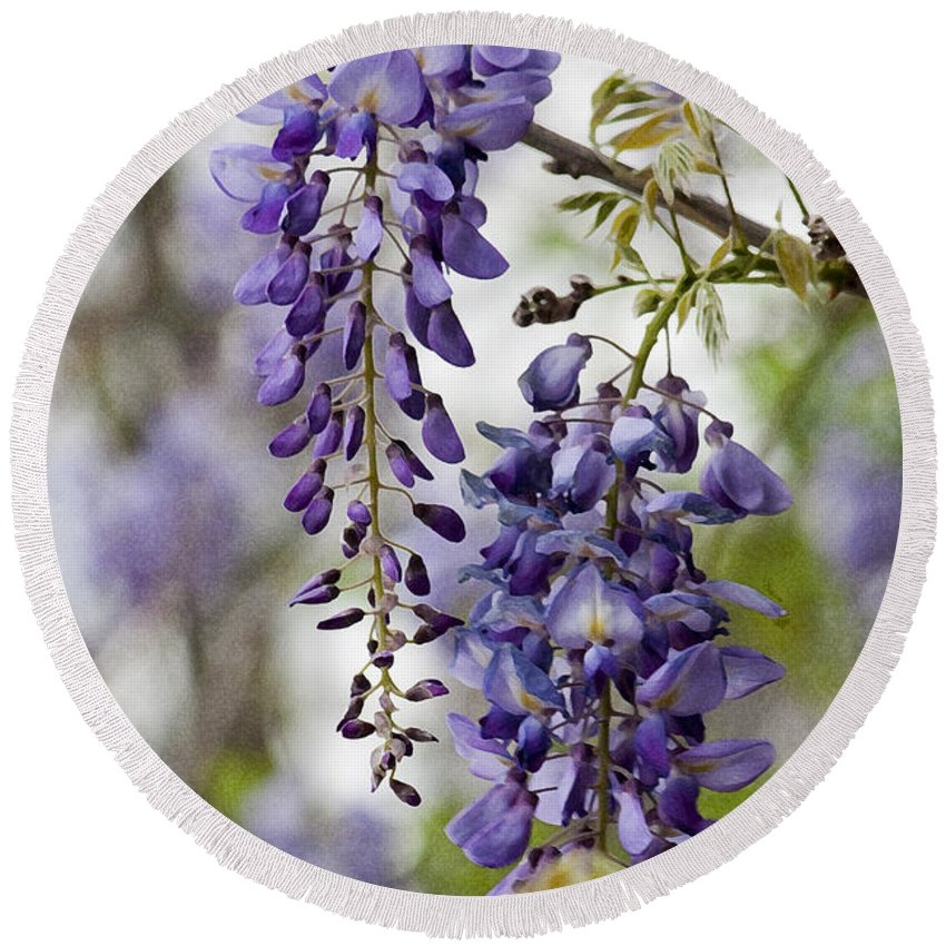 Hygrophila Difformis Round Beach Towel featuring the photograph Draping Lavender Purple Wisteria Vines by Kathy Clark