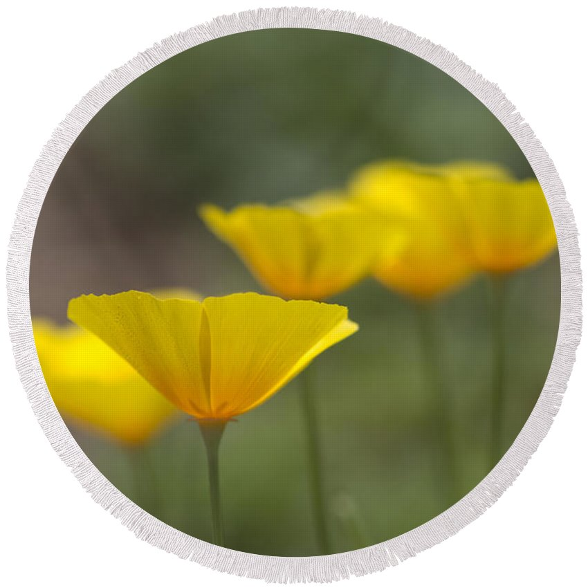 Eschscholzia Californica Round Beach Towel featuring the photograph Dreamy California Poppies - Eschscholzia Californica by Kathy Clark
