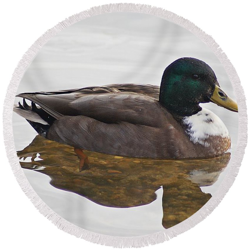Duck Round Beach Towel featuring the photograph Duck 3 by Joe Faherty