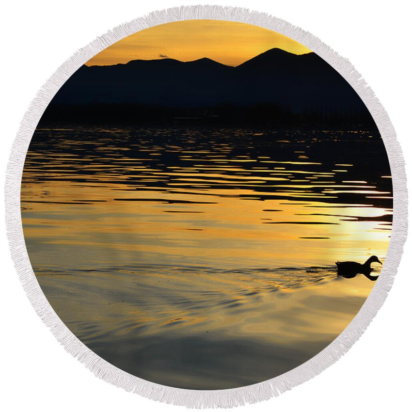 Duck Round Beach Towel featuring the photograph Duck Swimming by Mats Silvan