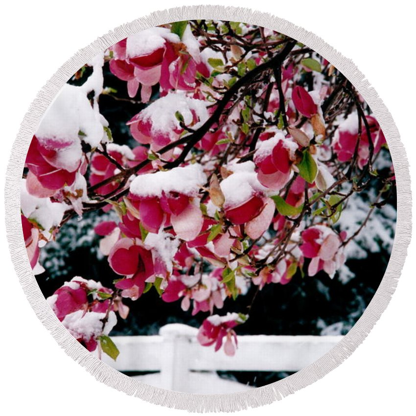 Magnolia Round Beach Towel featuring the photograph Early Magnolia Late Snow by Byron Varvarigos