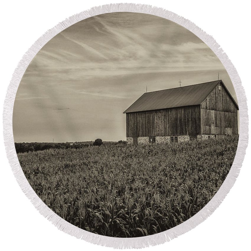 Cj Schmit Round Beach Towel featuring the photograph Ears In The Field by CJ Schmit