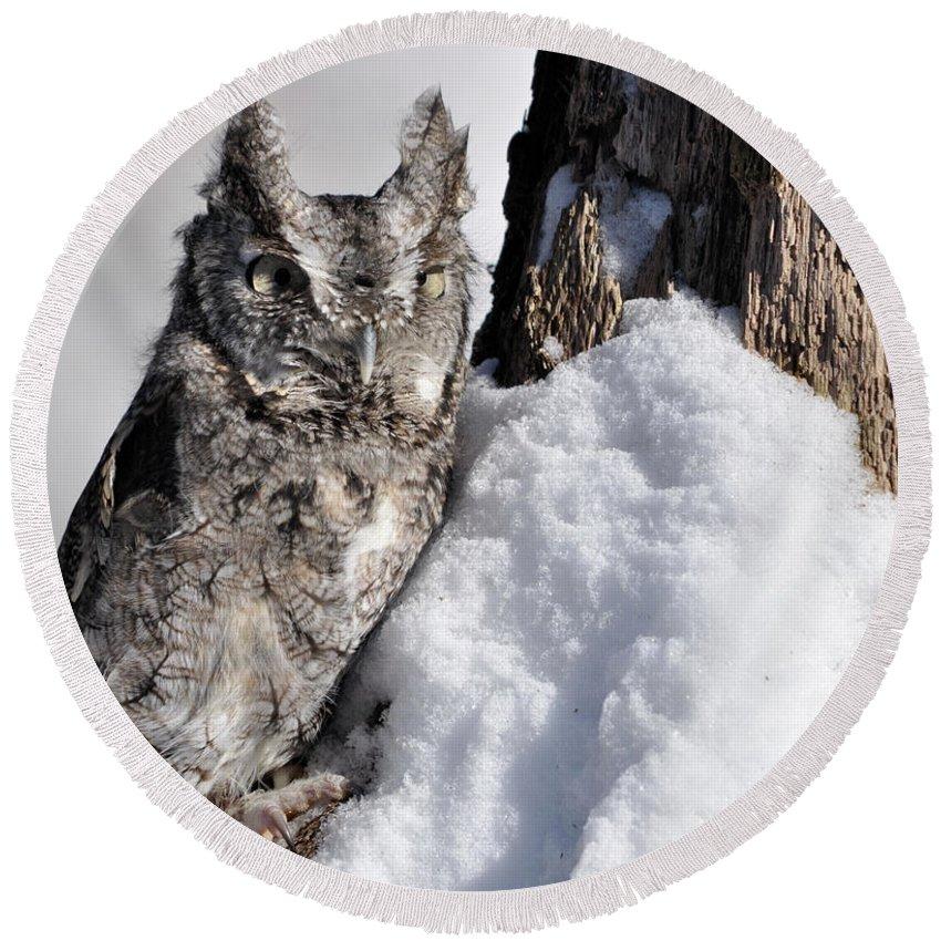 Owl Round Beach Towel featuring the photograph Eastern Screech Owl by Ronald Grogan