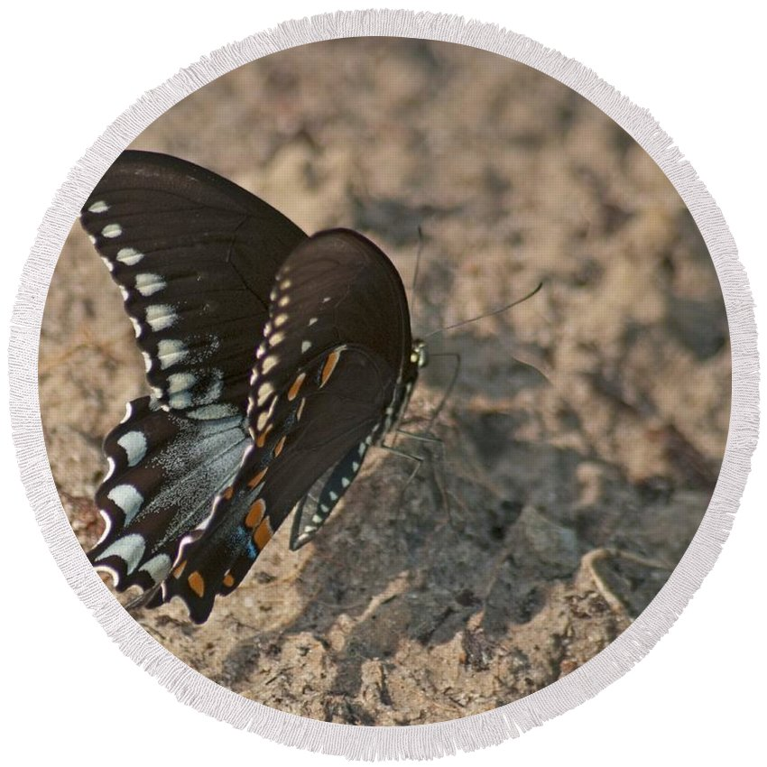 Adult Round Beach Towel featuring the photograph Eastern Tiger Swallowtail 8526 3205 by Michael Peychich