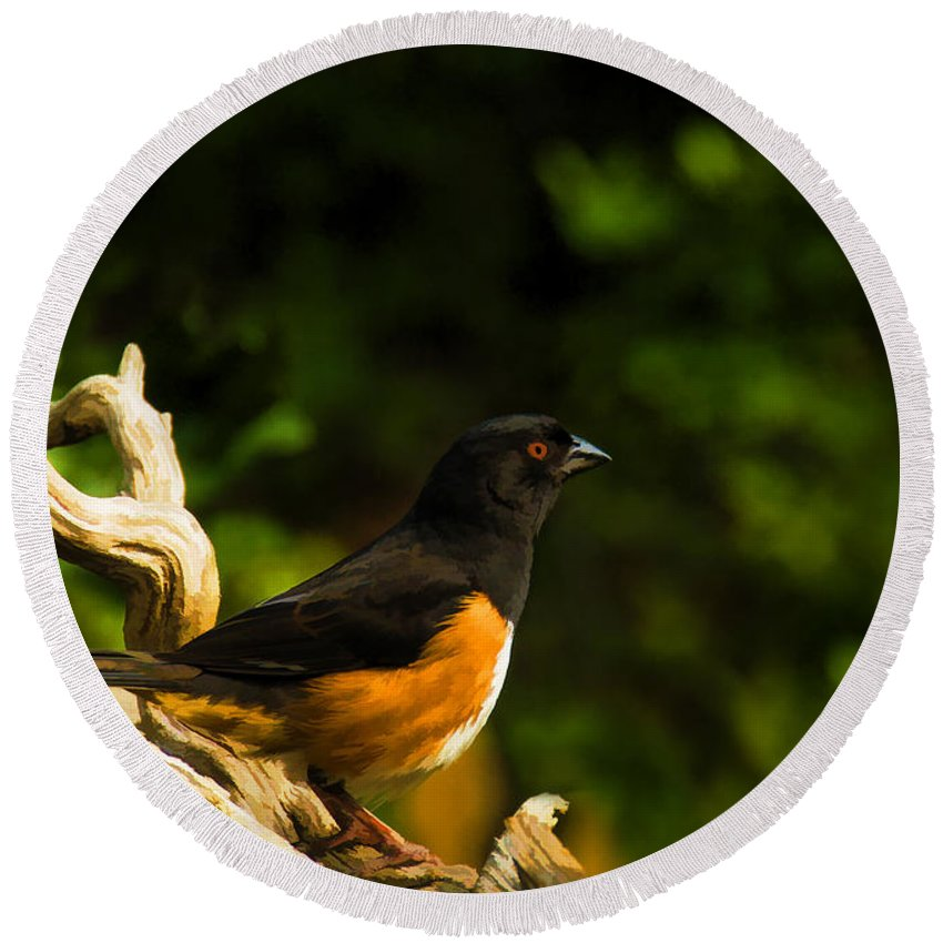 Eastern Towhee Round Beach Towel featuring the painting Eastern Towhee by Steven Richardson