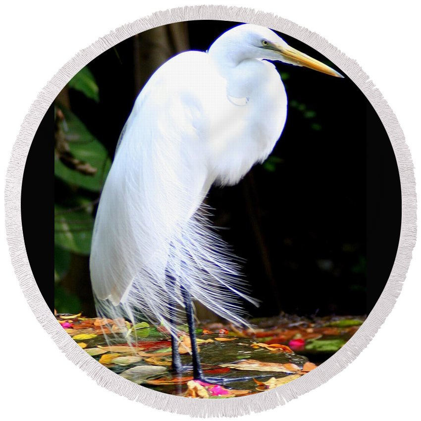 Snowy Egret Round Beach Towel featuring the photograph Elegant Egret At Water's Edge by Laurel Talabere