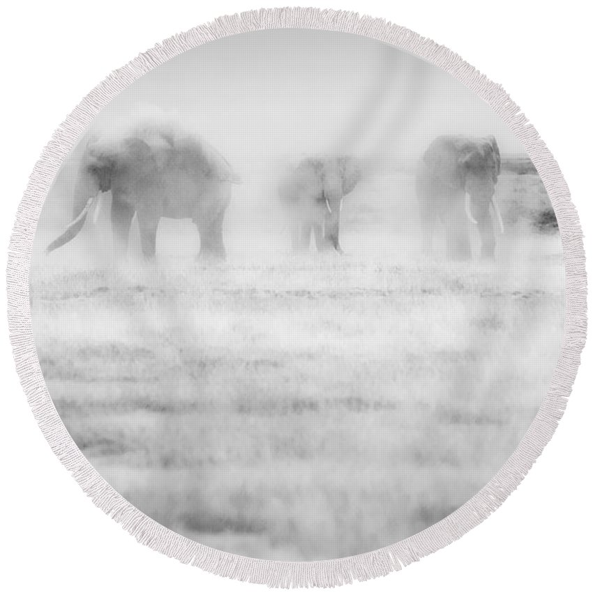 Elephants Round Beach Towel featuring the photograph Elephants In Dust by Jack Daulton