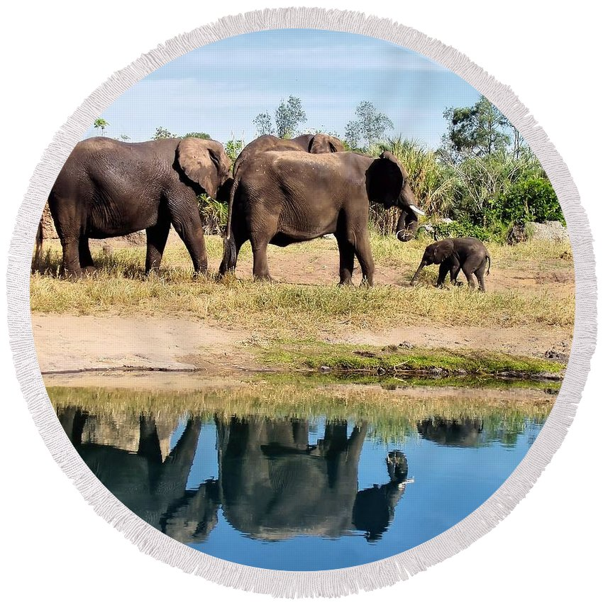 Animal Round Beach Towel featuring the photograph Elephants by Jenny Hudson