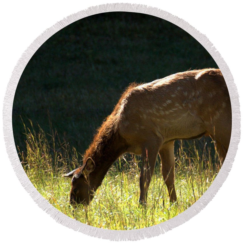 Calf Round Beach Towel featuring the photograph Elk Calf by Mel Hensley
