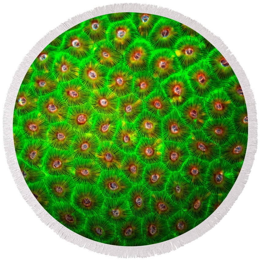 Green Coral Round Beach Towel featuring the photograph Emerald Coral by Doug Sturgess