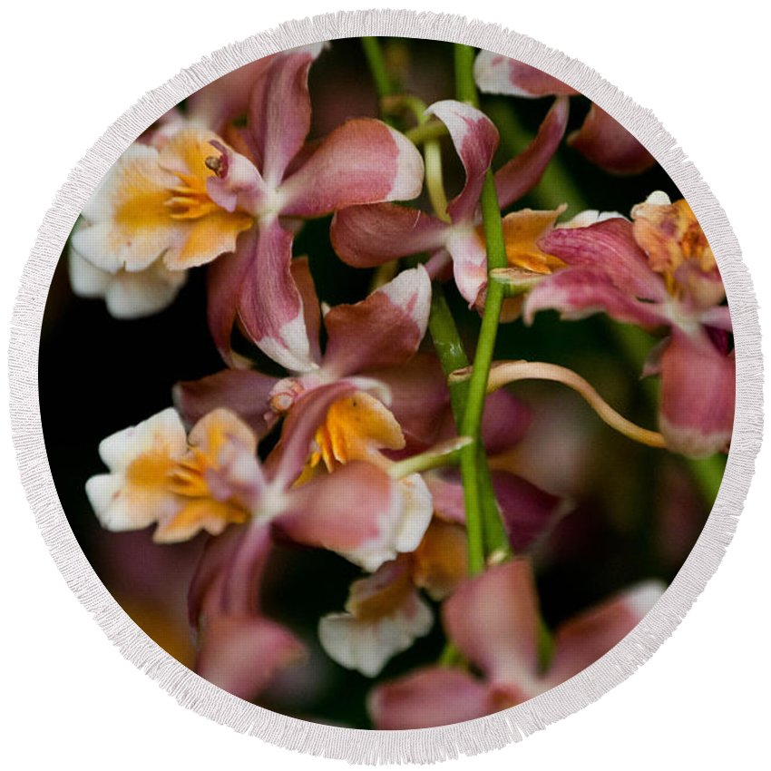 Flower Round Beach Towel featuring the photograph Emma's Orchid by Trish Tritz