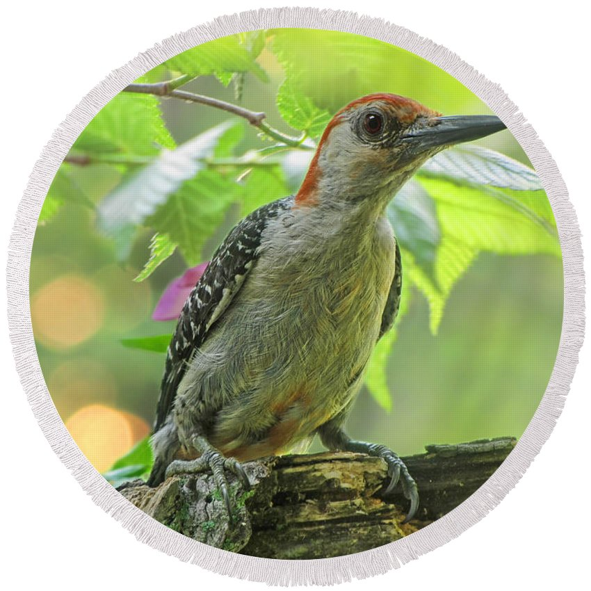Nature Round Beach Towel featuring the photograph Evening Woodpecker by Debbie Portwood