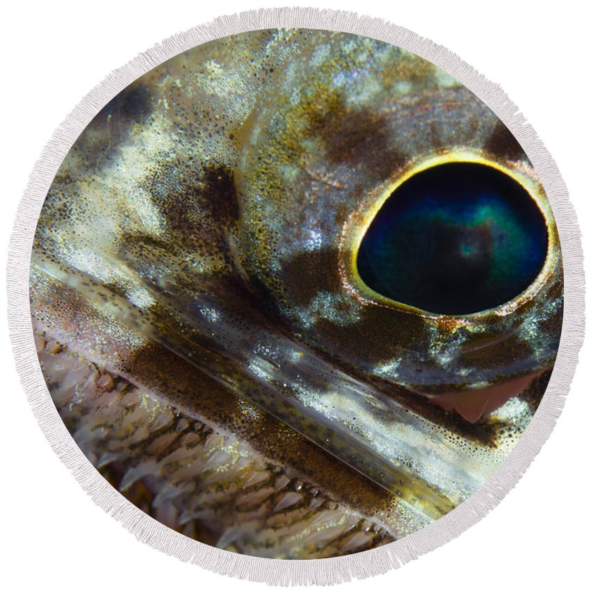 Sea Life Round Beach Towel featuring the photograph Extreme Close-up Of A Lizardfish by Todd Winner