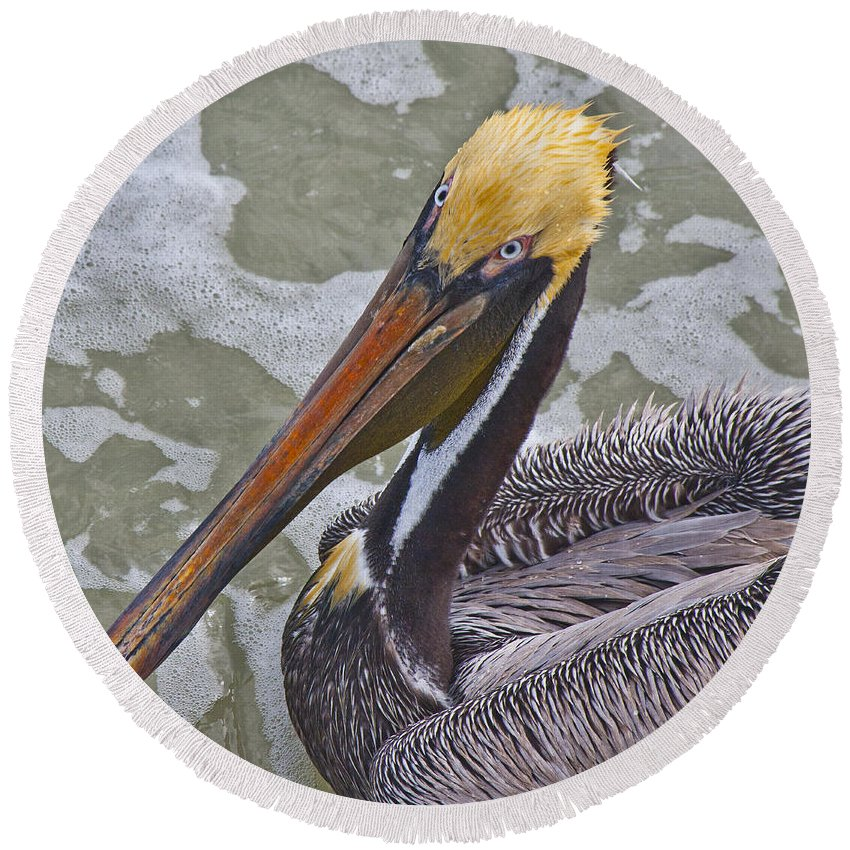 Pelican Round Beach Towel featuring the photograph Eye To Eye by Betsy Knapp