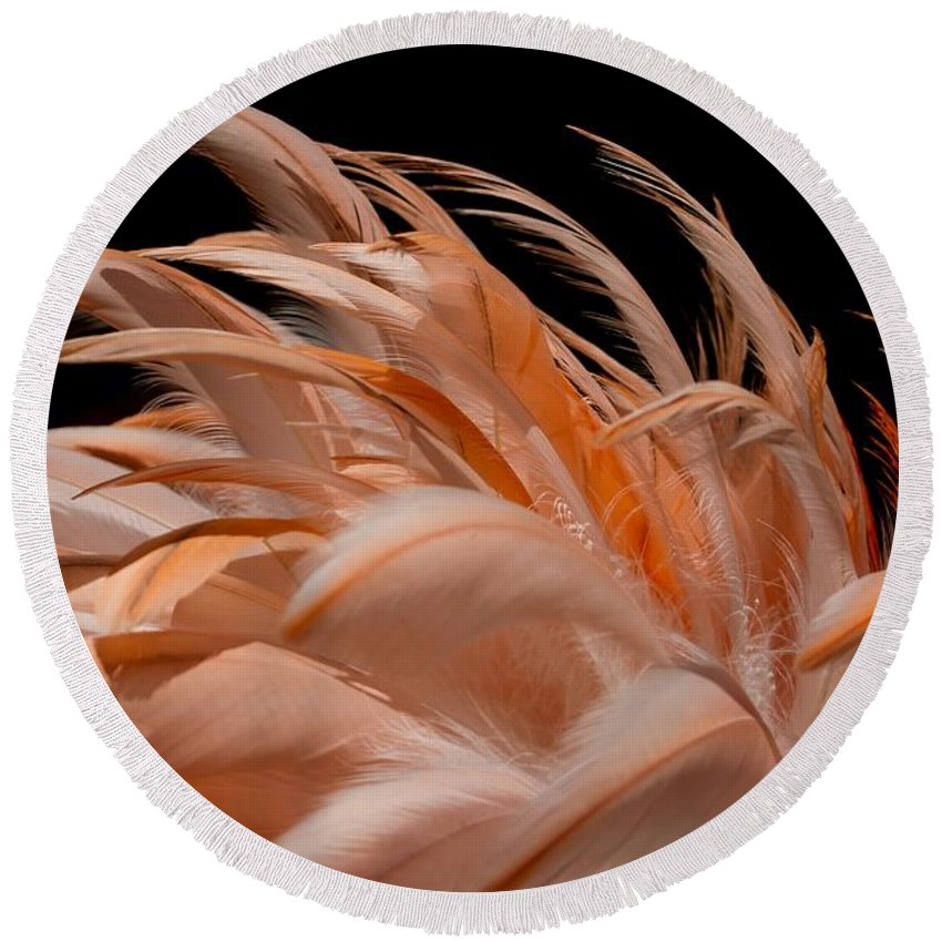 Flamingo Round Beach Towel featuring the photograph Fabulous Flamingo Feathers by Sabrina L Ryan