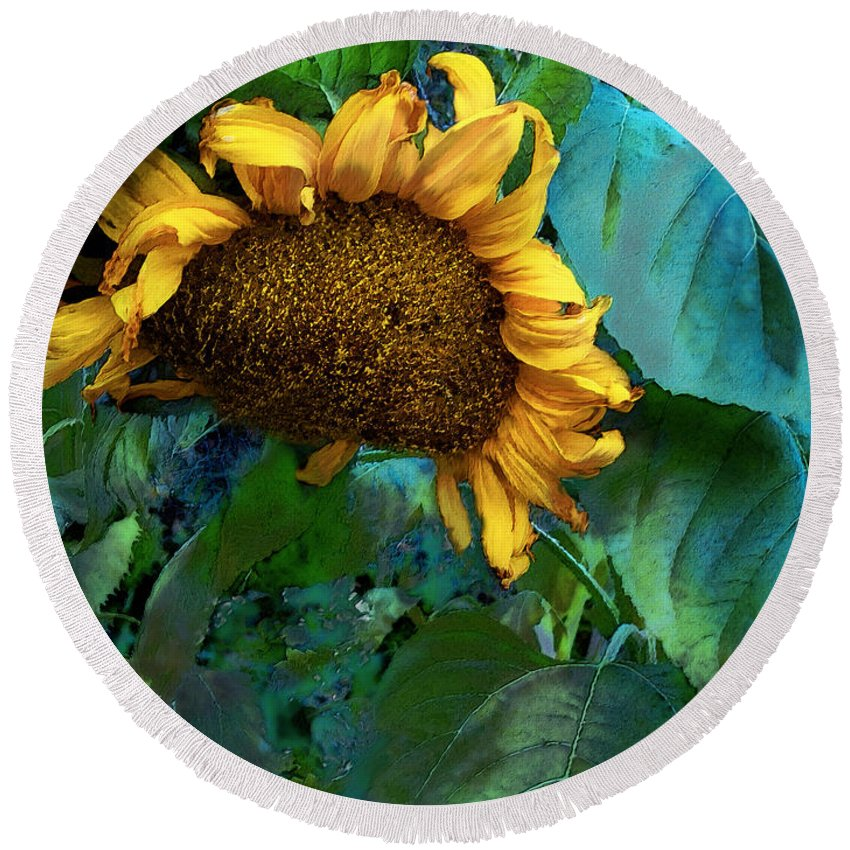 Sunflower Round Beach Towel featuring the mixed media Fading Giant by Carol Cavalaris