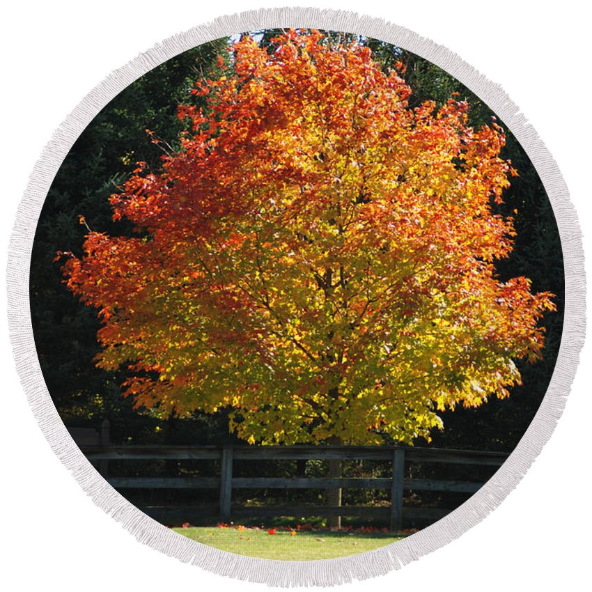 Fall Colors Round Beach Towel featuring the photograph Fall Colored Tree by Optical Playground By MP Ray