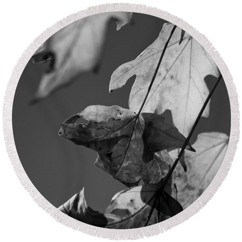 Leaf Round Beach Towel featuring the photograph Fall Leaf Light by Lauri Novak
