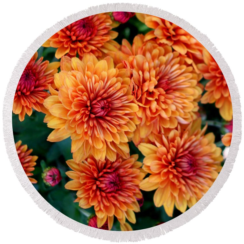 Mums Round Beach Towel featuring the photograph Fall Mums by Mel Hensley