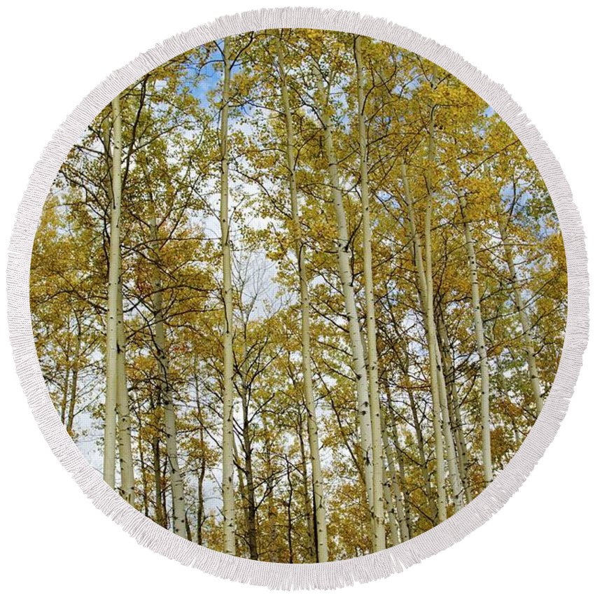 Fort Mcmurray Landscape Round Beach Towel featuring the photograph Falling For The Birch And Aspens by Alanna DPhoto