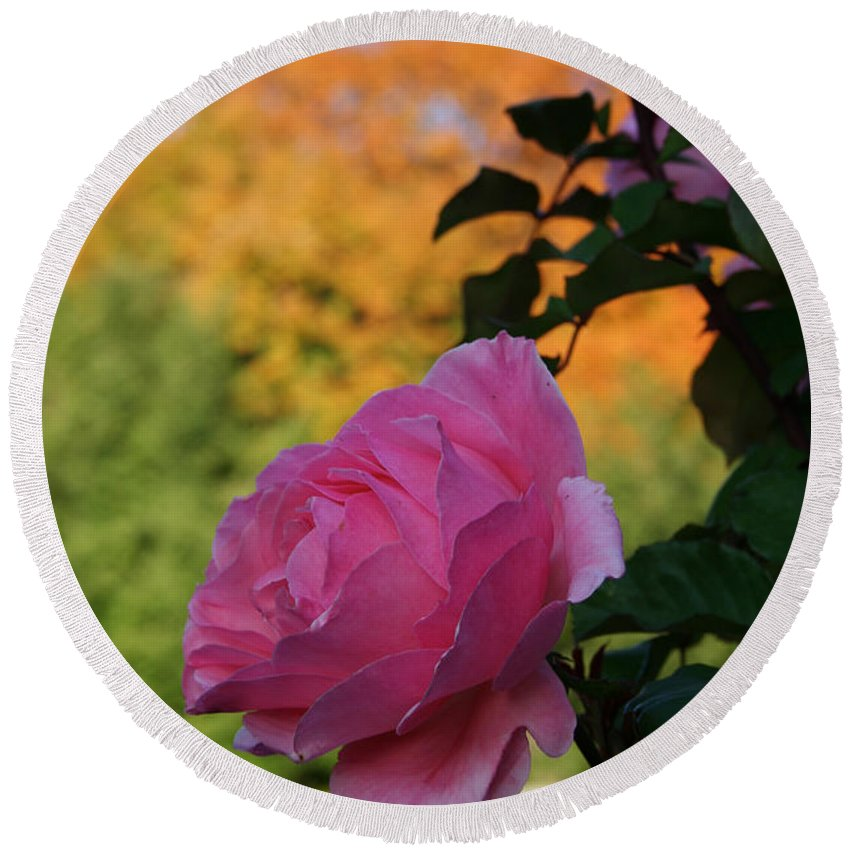 Flower Round Beach Towel featuring the photograph Fall's Final Rose by Susan Herber