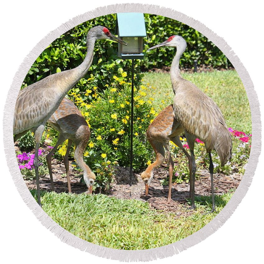 Sandhill Cranes Round Beach Towel featuring the photograph Family Meal Time by Carol Groenen