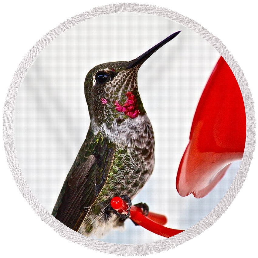 Birds Round Beach Towel featuring the photograph Fancy Friend by Diana Hatcher