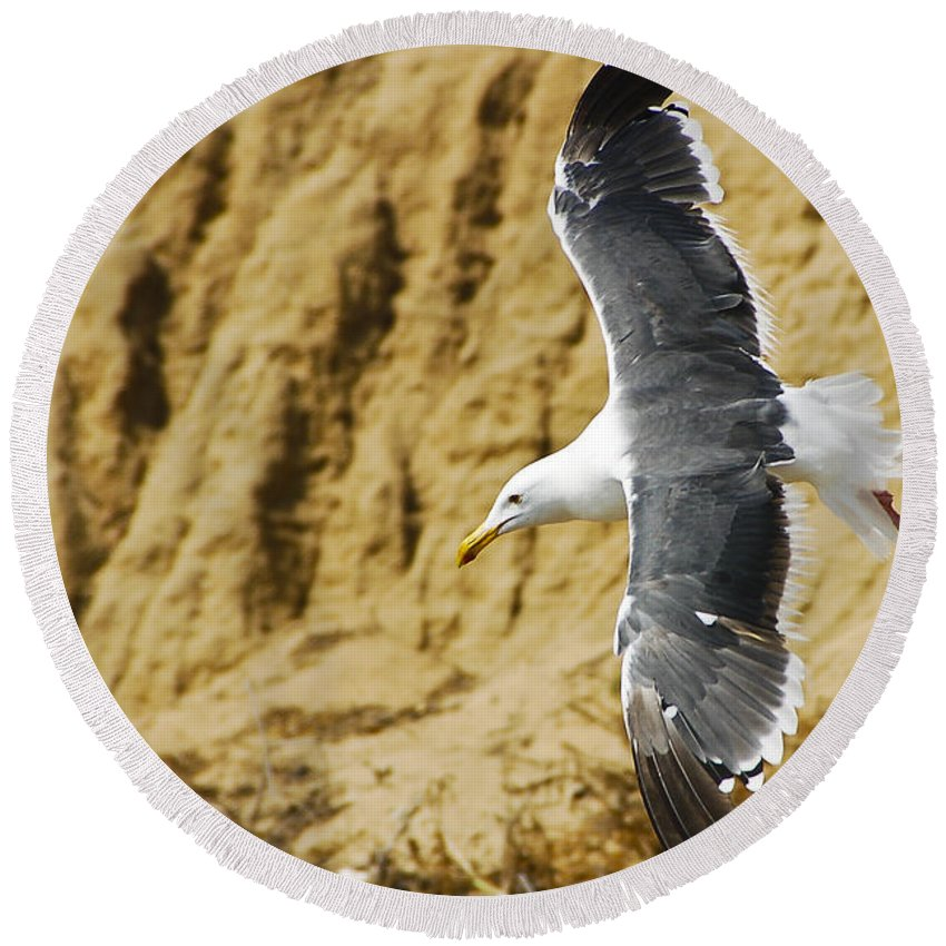 Bird Round Beach Towel featuring the photograph Feathered Friend Cruising by Jon Berghoff