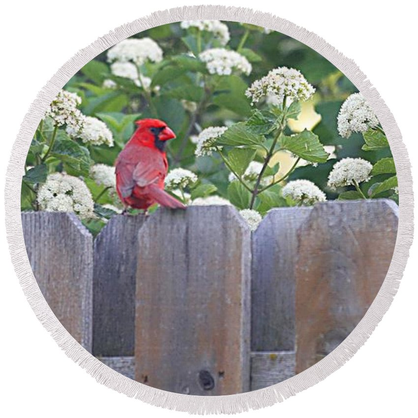 Cardinal Round Beach Towel featuring the photograph Fence Top by Elizabeth Winter