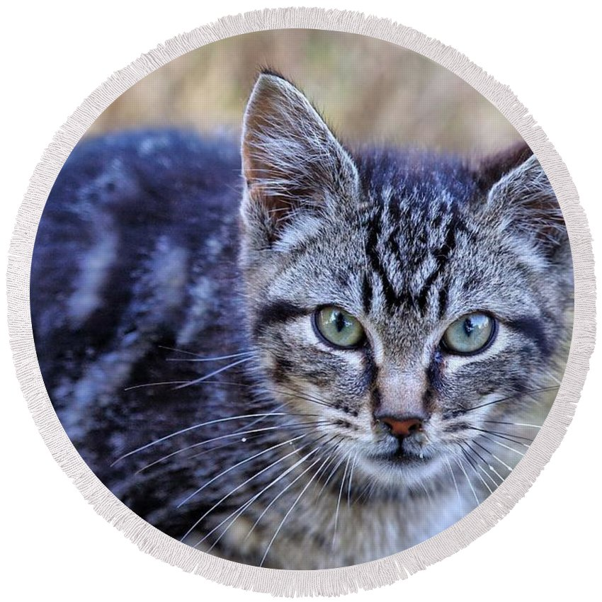 Tabby Round Beach Towel featuring the photograph Feral Kitten by Chriss Pagani