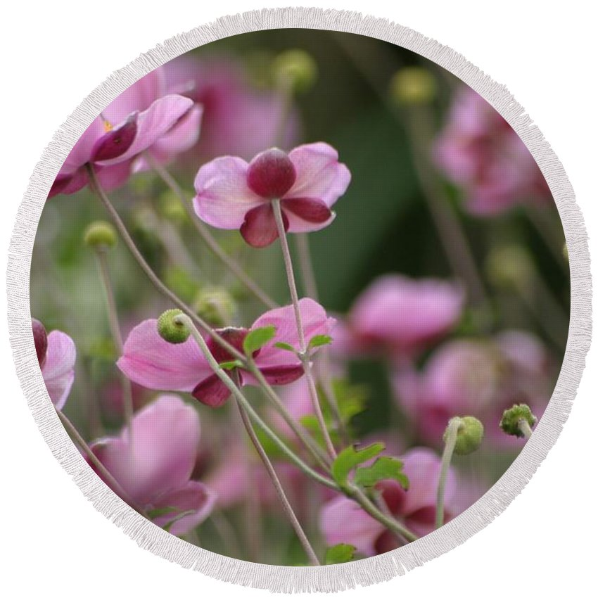 Floral Round Beach Towel featuring the photograph Field Of Japanese Anemones by Living Color Photography Lorraine Lynch