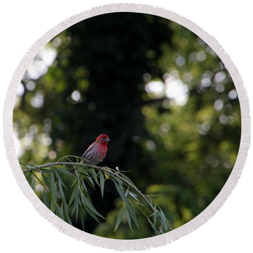 Tn Round Beach Towel featuring the photograph Finch In The Willow by Ericamaxine Price