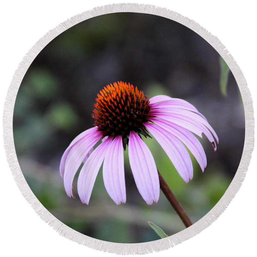 Flower Round Beach Towel featuring the photograph Fire Flower by Travis Truelove