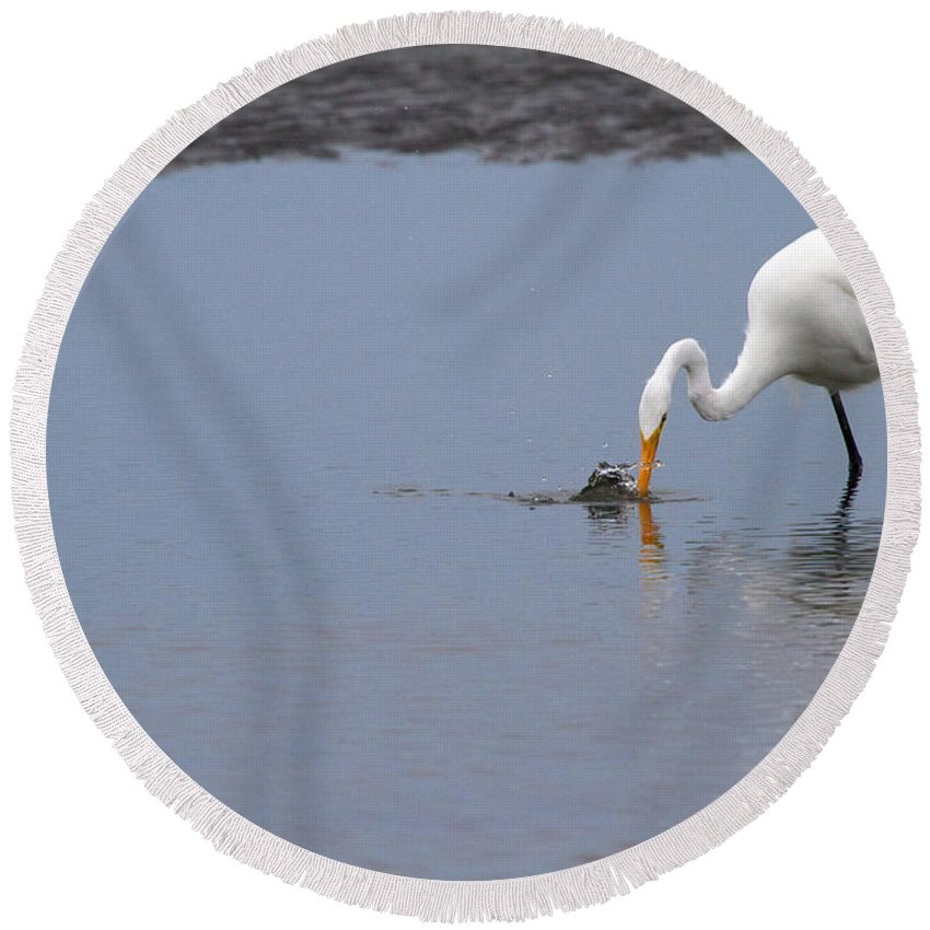 Egret Round Beach Towel featuring the photograph Fishing For A Meal by Karol Livote