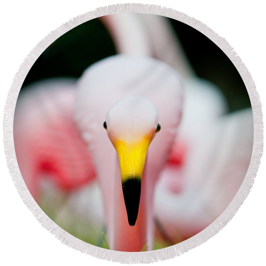 Austin Round Beach Towel featuring the photograph Flamingo 2 by Sean Wray